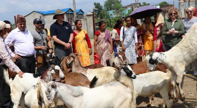 सामाजिक उद्यमी महिला जिल्ला सहकारी संघ बाँकेले दशैमा ३ हजार खसी संकलन गरी बेच्दैे