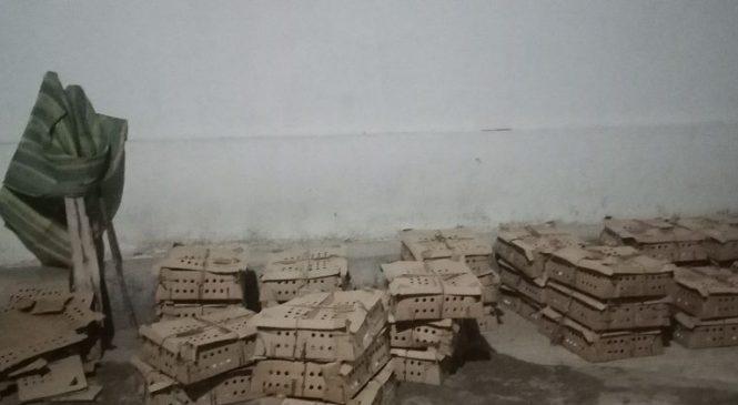 अवैध चल्लासहित कोहलपुरमा दुई पक्राउ