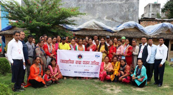 गृहणी महिलालाई व्यवसायिक बाख्रापालन तालिम